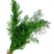 Dill (Anethum graveolens) Compatto (Item ID:12166)
