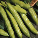 Broad Bean